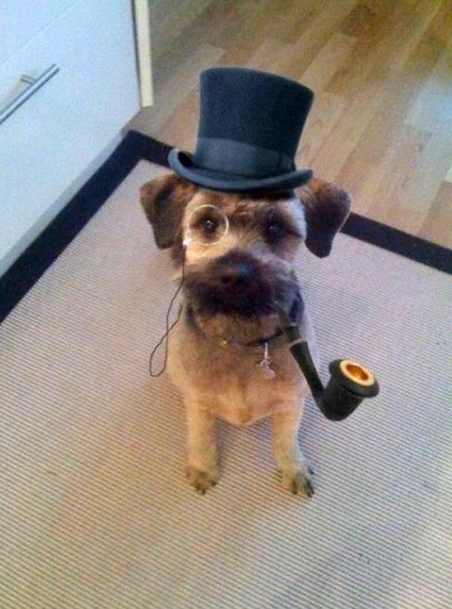 Dog wearing top hat