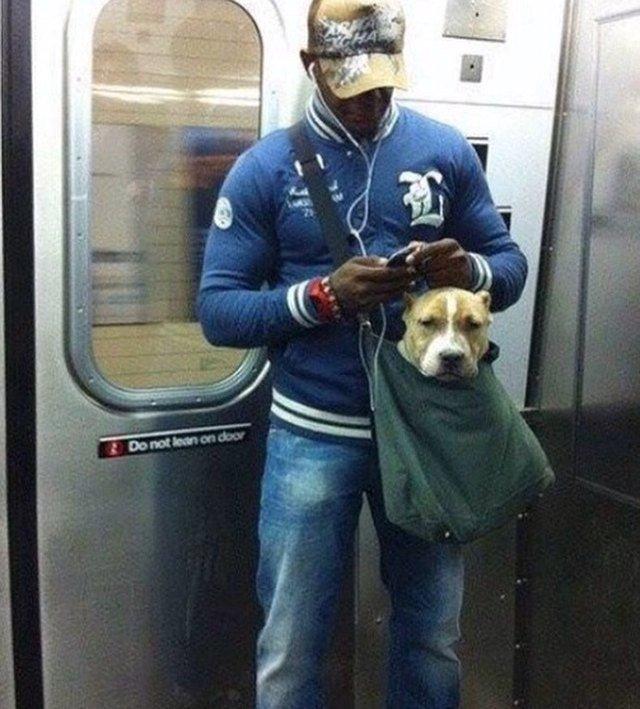 Dog in messenger bag.