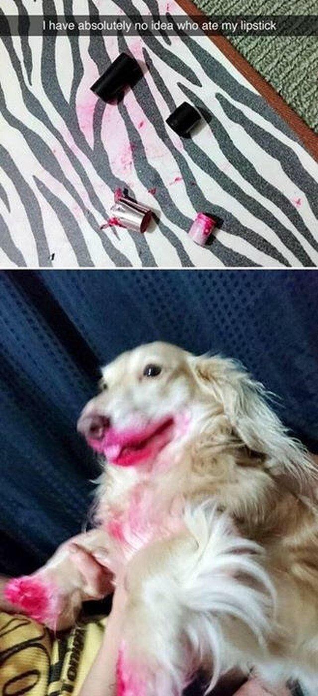Dog ate lipstick!