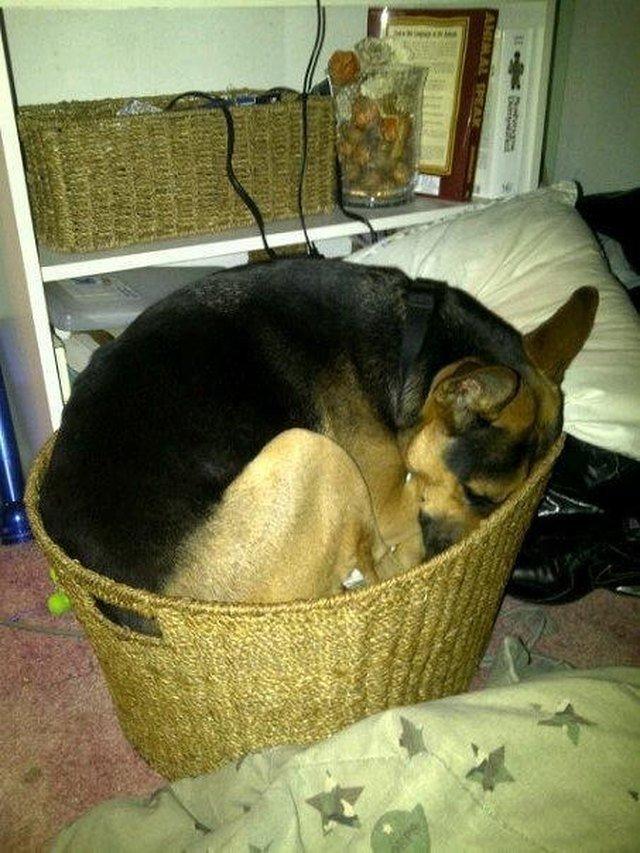 18 Dogs Sleeping Like Weirdos