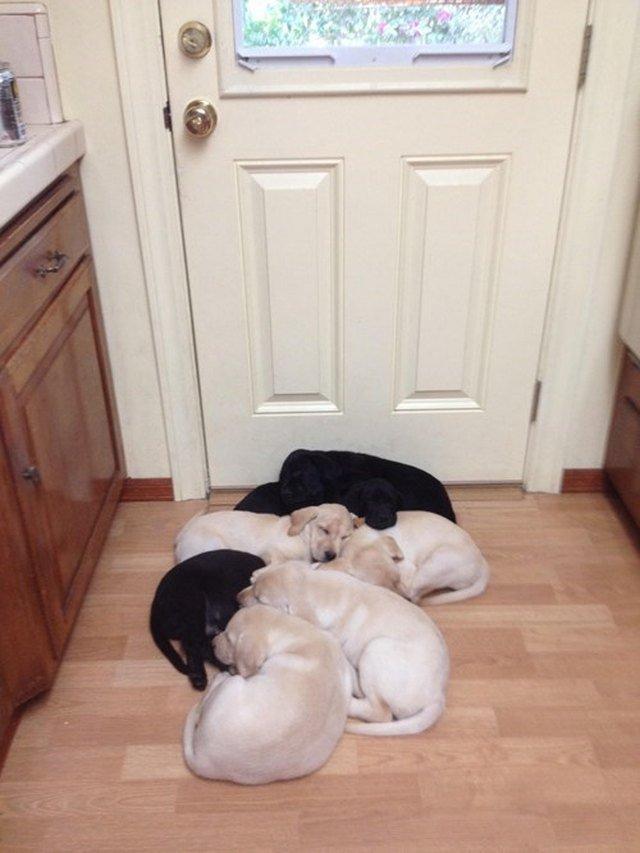 Puppies sleeping in front of door.