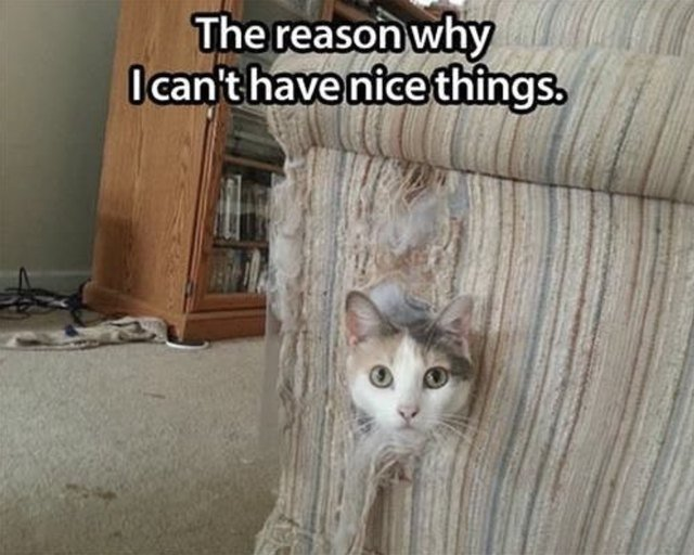 Cat inside an old couch