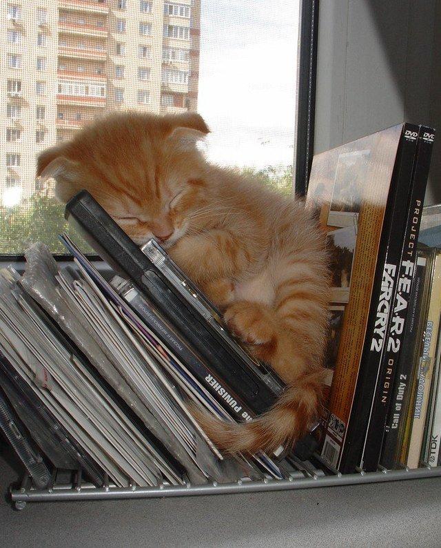 Kitten fast asleep on shelf with DVD