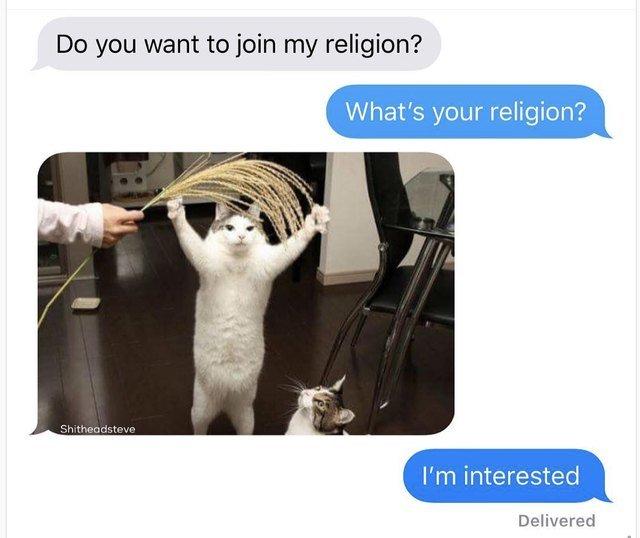 Cat meme about a new cat religion