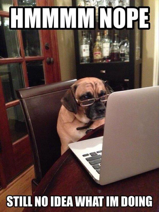 Dog wearing glasses, looking at laptop
