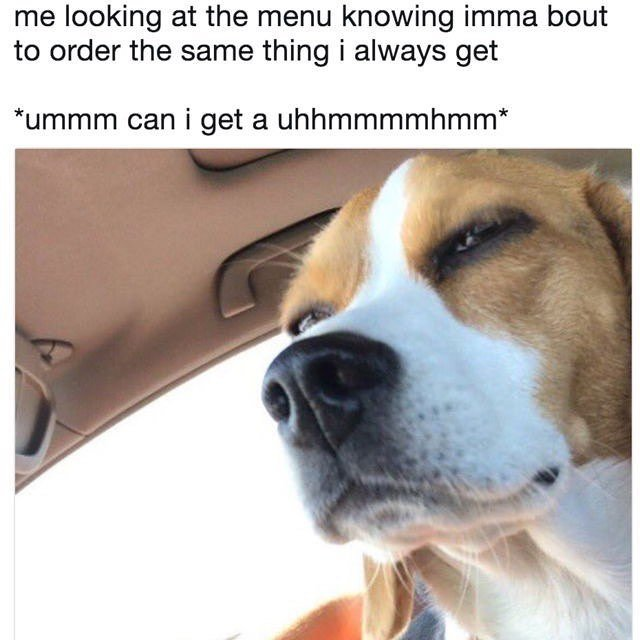 Dog trying to decide what to order.
