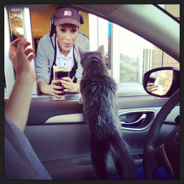 Cat at a coffee drive thru