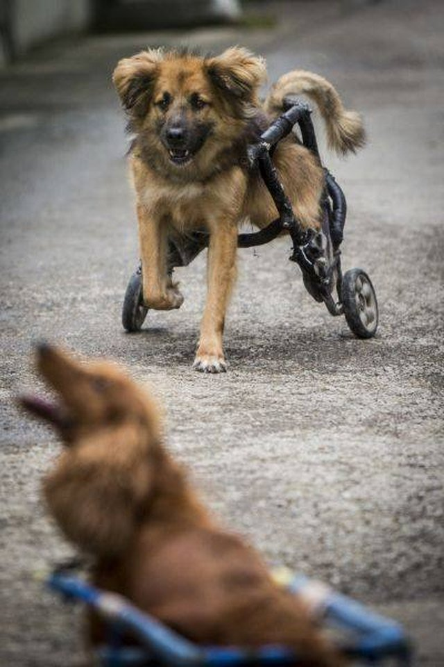 Running Pup