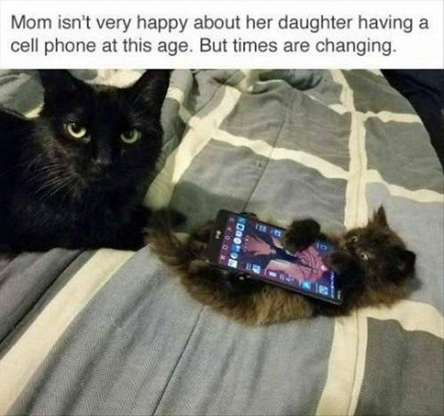 Kitten with a cell phone
