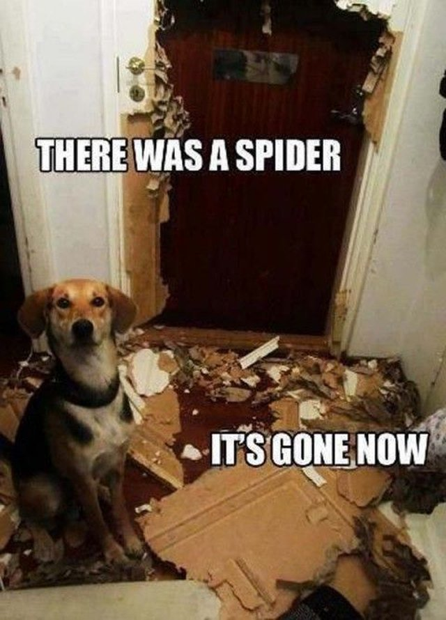 Dog sitting next to destroyed door. Caption: There was a spider. It