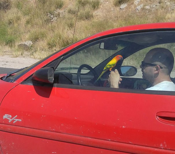 Distracted Driving? That