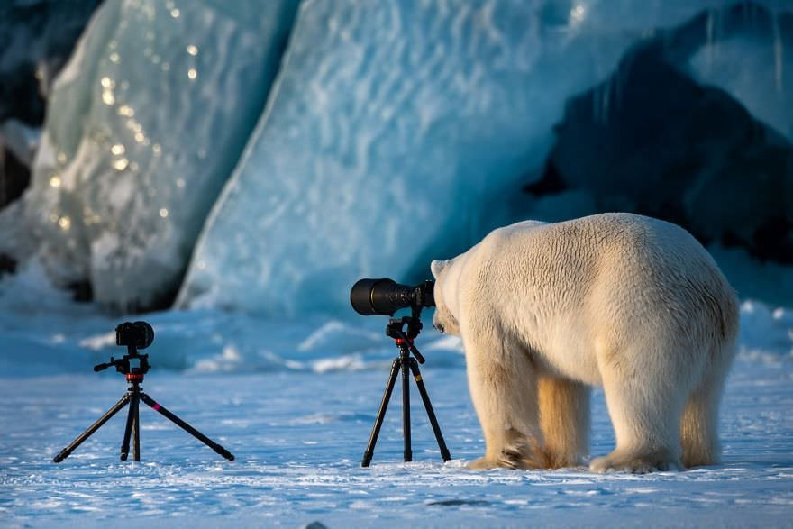 Wildlife Photograbear