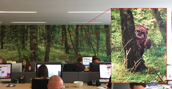 We Have A Wallpaper Forest On One Of The Walls At Work. I Wonder How Long Till The Boss Notices My Upgrade