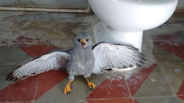 My Employee Forgot To Close The Bathroom Window Last Night. I Think It