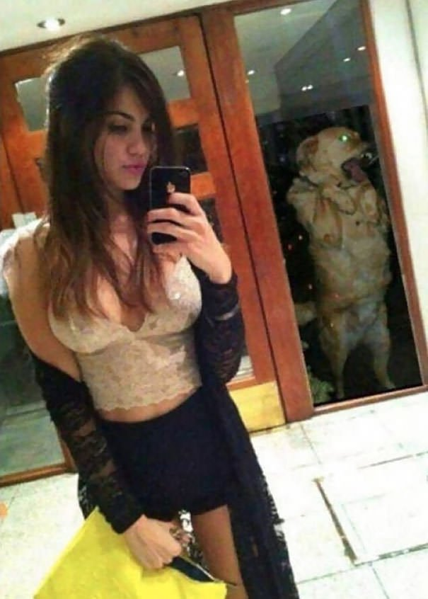 Even This Dog Is Sick Of Her Selfies