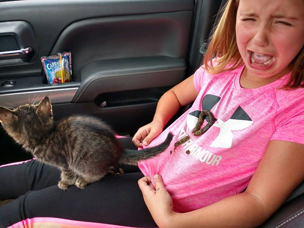 Elyse Brought Home A New Kitty Today! Gavin Hoefs Recorded Them Bonding On The Way Home