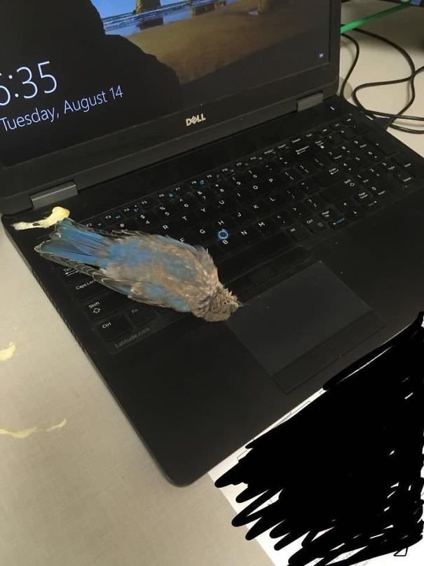 A Bird Flew In My Window, Sh*t On My Laptop, And Decided To Die Right In Front Of Me. How