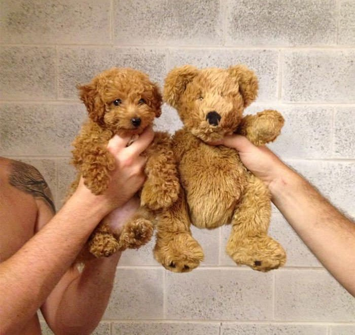 Puppy And Teddy Twins