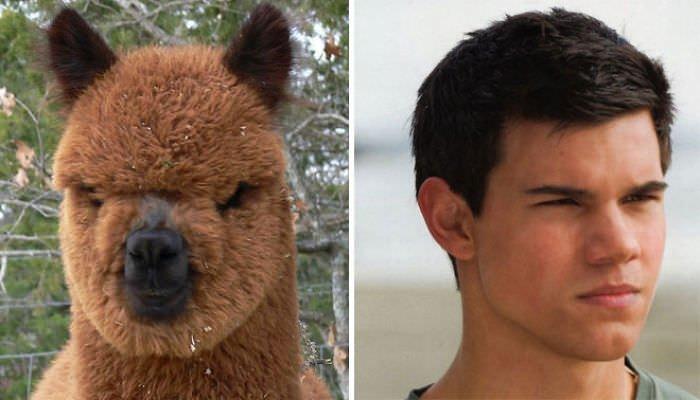 Jacob Black = Alpaca