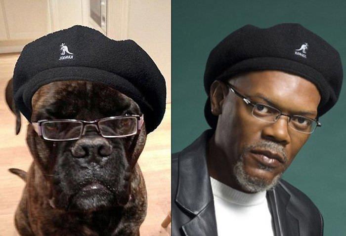 Dog And Samuel Jackson