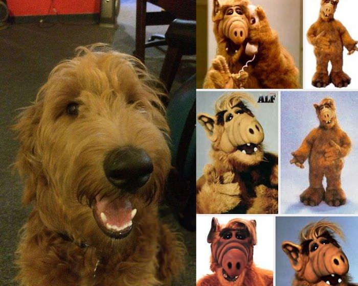 Puppy Looks Like Alf