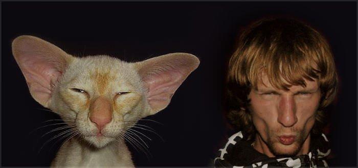 Oriental Cat & Me =d
