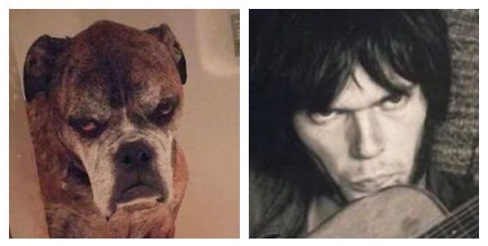 Dog Totally Looks Like Neil Young