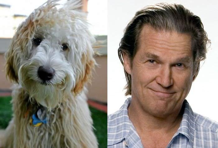 Jeff Bridges / Shaggy Dog