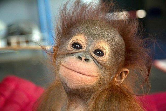 Morning Monkey Smile