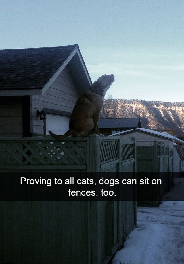 Dog sitting on a fence like he