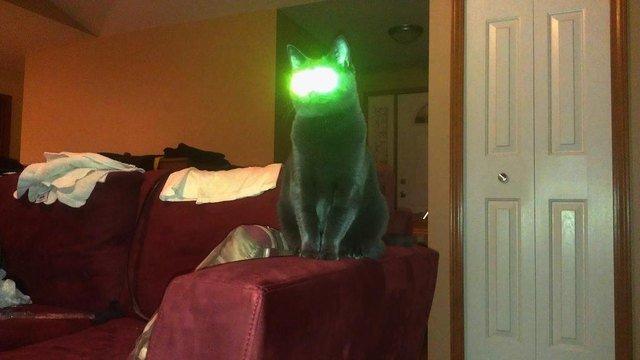 Alien looking cat