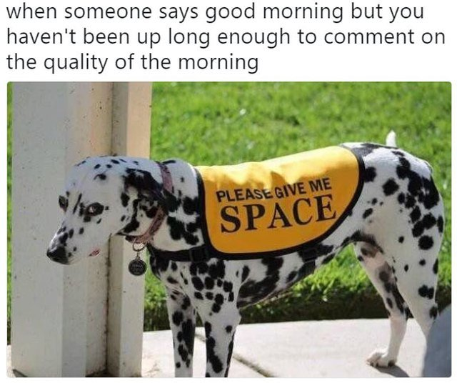 """Dog wearing vest that says """"please give me space"""""""