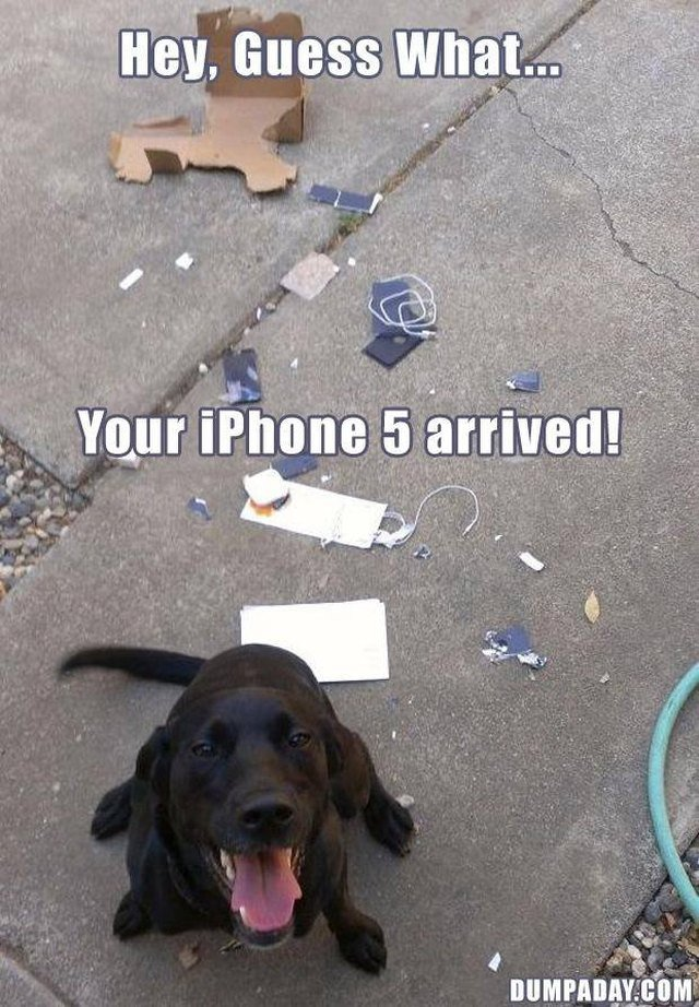 Puppy sitting next to destroyed phone and packaging.