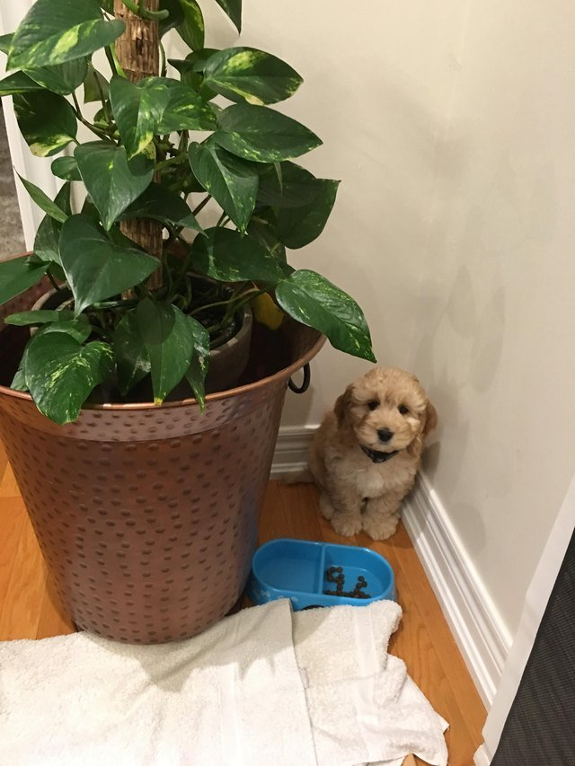 Puppy hiding behind potted plant.