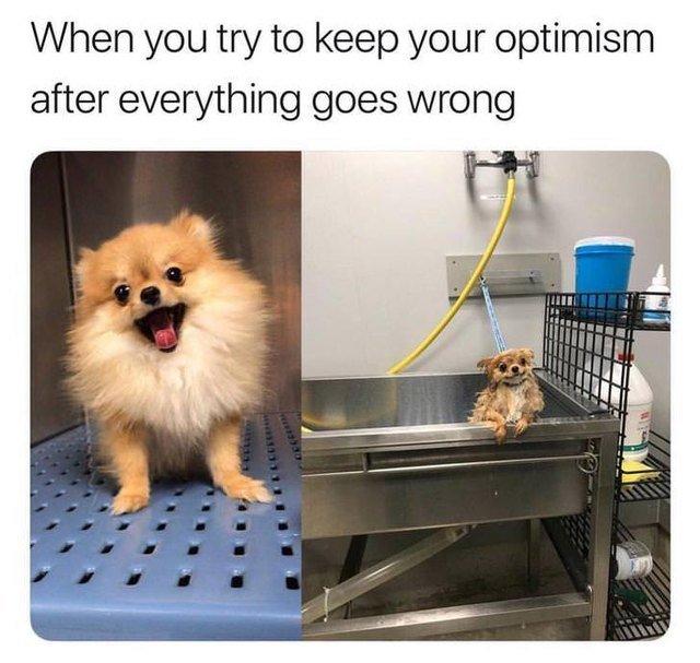 Dog smiling in bathtub