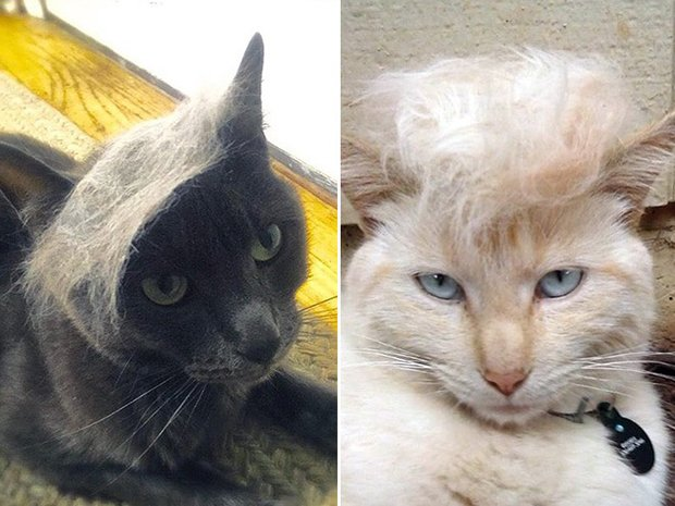 cat-hairstyle-16