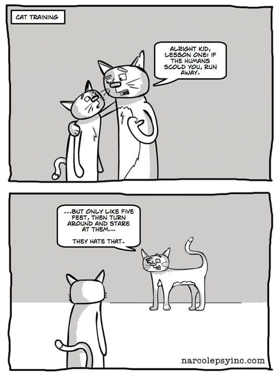 cat-owner-12