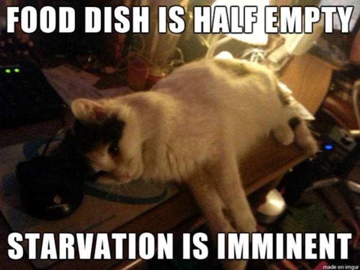 cat-owner-8
