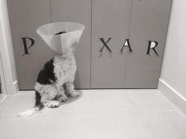 Dog wearing E-collar made to look like the Pixar logo