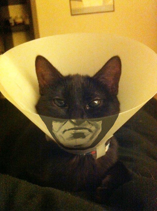 Cat wearing E-collar styled like Batman.