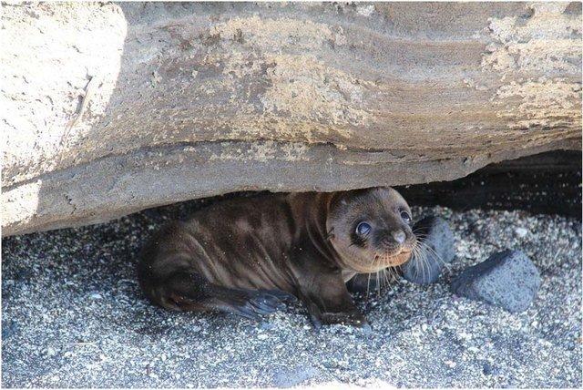 Seal pup hiding under big log.