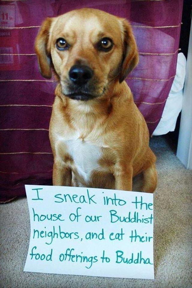 Dog who sneaks his neighbor