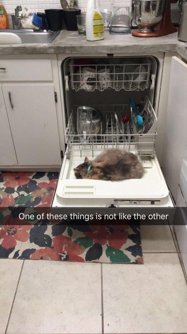 Cat sleeping on the open door of a dishwasher.