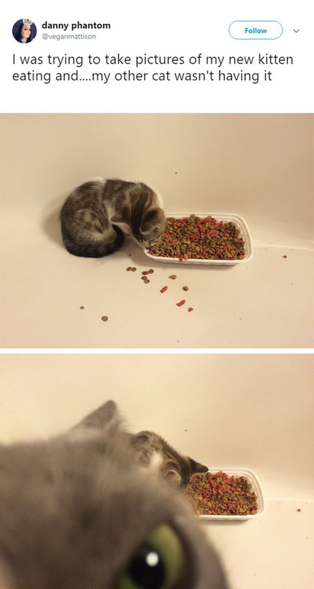 Cat photobombing kitten.