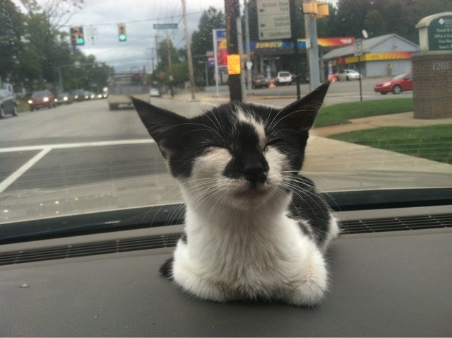 Happy rescued kitten sitting on a car
