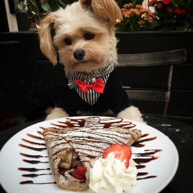 Dog dressed up at a restaurant