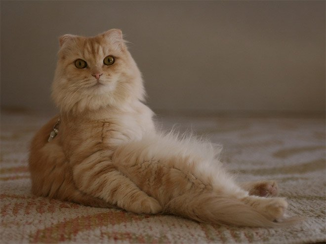 hilarious-cats-sitting-awkwardly-10