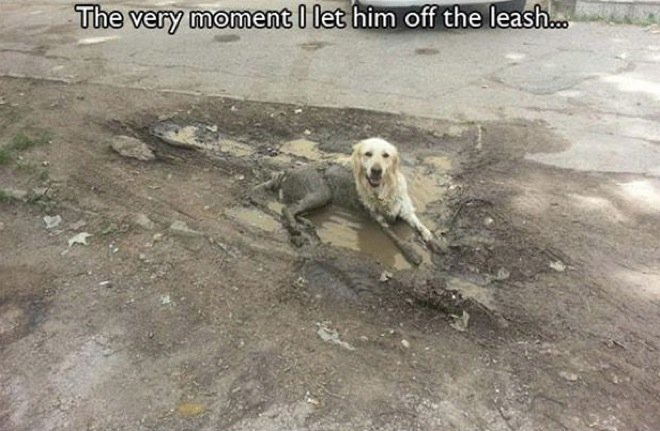hilarious-dog-owners-situations-3
