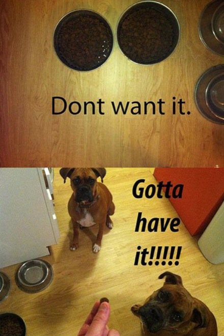 hilarious-dog-owners-situations-7