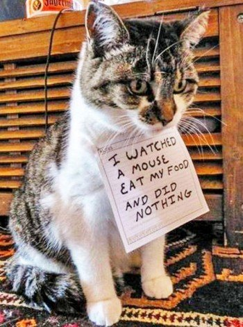 naughty-dogs-cats-confessing-crimes-28